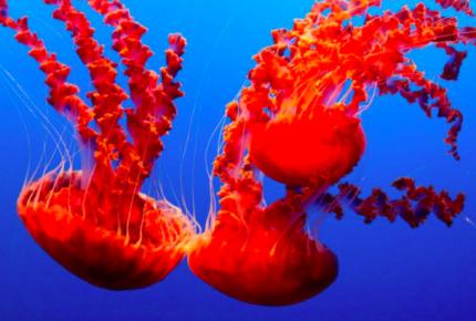 Calentamiento global desarrollara más criaturas venenosas