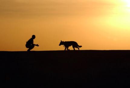 Proponen que el 3 de noviembre se recuerde a las mascotas fallecidas