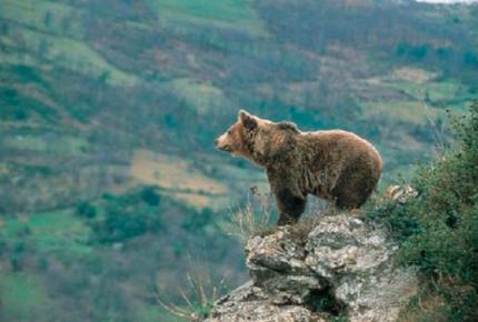 Para protegerse de un ataque de oso salta a un acantilado