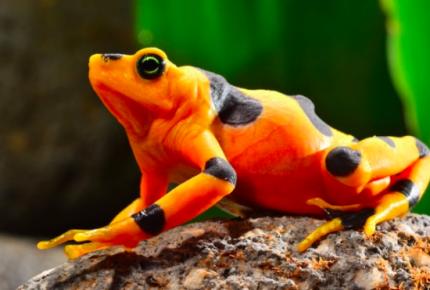 Alerta por la pérdida del 60% del hábitat de varias especies en el mundo