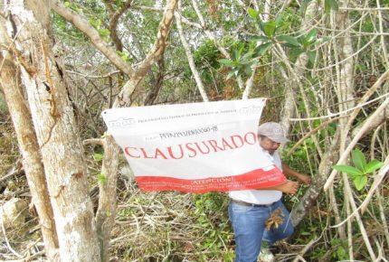 Profepa clausura predio en Chetumal por remoción, quema y relleno de humedal