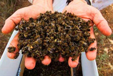 Condicionó exterminador de abejas retiro del área siniestrada en José María Morelos
