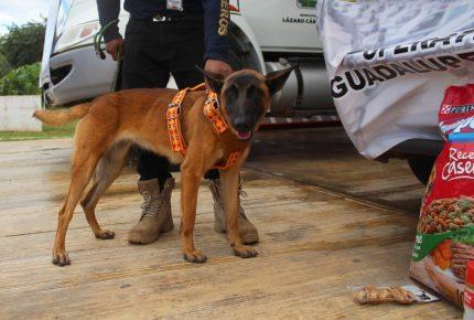 Integran elemento canino a #ProtecciónCivil de #LázaroCárdenas