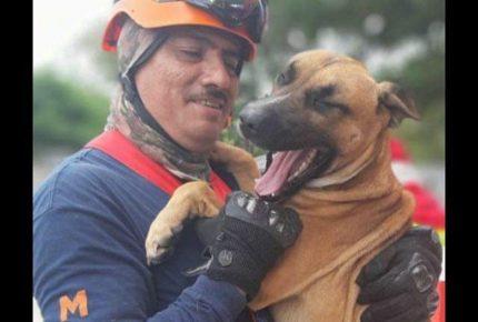 Cancún anfritrión de curso nacional en formación de perros de búsqueda y rescate