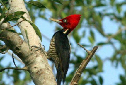 Todos los días se pierden 150 especies de mamíferos aves, insectos, peces y molusco en el mundo