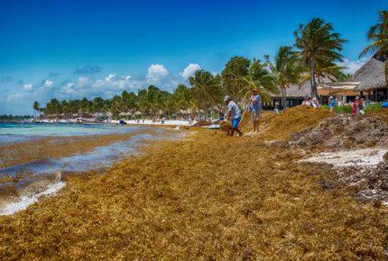 Requiere Quintana Roo 80 millones de pesos mensuales para atender arribo de sargazo