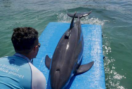 Apoyará Delphinus #SaveTheVaquitaDay